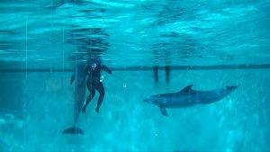 Kaksi delfiiniä ja kouluttaja delfinaarion altaassa.