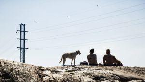 Koiria ja auringonottajia kalliolla.