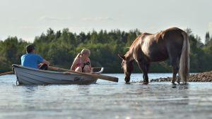 Rovaniemeläiset kuvaamassa Lietesaaren hevosia 23.7.2014