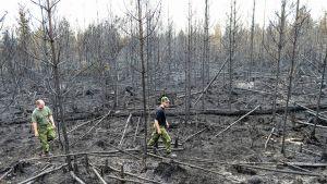 Ruotsalaiset metsänvartijat tarkastavat aluetta Seglinsbergissä Ruotsissa 6. elokuuta 2014.