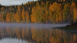 Metsän tarina -elokuvan lehdistökuva.