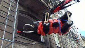 Mammuttia nostetaan Luonnontieteellisen museon ikkunasta sisään.