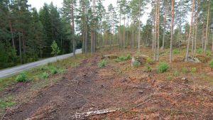 Kotkan Räski. Vasemmalla asfalttitie ja sen oikealla puolelle mäntymetsää, joka on harvennushakattu.