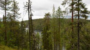 Hossan retkeilyalueen maisemaa, metsää ja vesistöä, jonka takana häämöttää Värikallio.