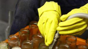 Omenamehua pullotetaan lasipulloihin.
