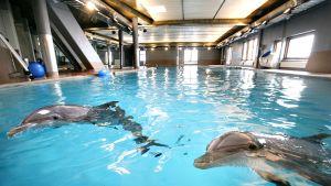 Särkanniemen huvipuiston delfinaarion allas.