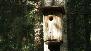 vanha sorvattu linnunpönttö