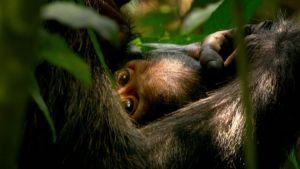 Kuva elokuvasta Wild Congo