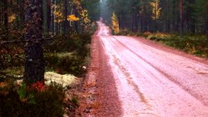 Tie Lauhanvuoren kansallispuistossa.