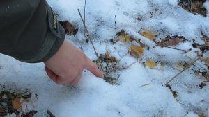 Neidonkenkiä lumessa