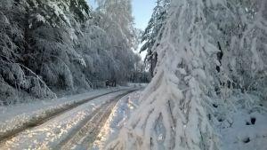 Luminen metsätie.