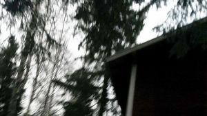 Puiden ympäröimä mökki pimeässä.