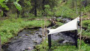 Lapin suojelualueilta on kerätty tuhansia hyönteisiä viime vuonna.