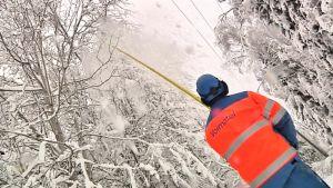 Jakeluverkkoasentaja pudottaa lunta sähkölinjoille taipuneista puista.