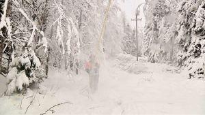 Sähköyhtiön työntekijä tiputtaa lunta pois puista.