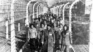 Auschwitzin leiri vapauttamisen jälkeisenä päivänä.