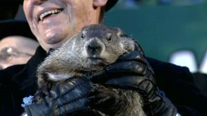 Punxsutawney Phil -murmeli ennustamassa talven loppua Murmelinpäivänä.