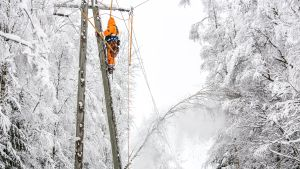 Sähkölinjalle kaatunutta puuta poistetaan.