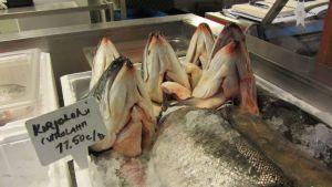 kalojen päitä