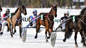 Hevosia ja ohjastajia Levin jääraveissä.