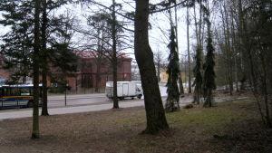 Kuva Rautatienpuistosta, jossa näkyy kuusia ja lehtipuita sekä taustalla Pohjoinen Rautatienkatu.