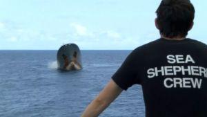 Sea Shepherdin miehistönjäsen seuraa Thunderin uppoamista.
