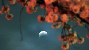 Osittainen kuunpimennys Utsunomiyassa Tochigin prefektuurissa Japanissa 4. huhtikuuta 2015.