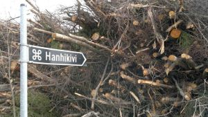 Hanhikiven kyltti ja kasa hakattua puuta Pyhäjoen Hanhikivenniemellä.
