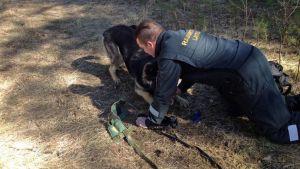 Rajakoira ja rajavartija harjoittelevat maastossa.