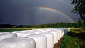 Kuvassa rehupaaleja pellolla sateenkaaren alla