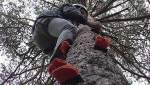 Poika kiipeää kiipeilypuuhun