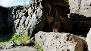 Tölkki linnanraunioilla Kajaanissa.