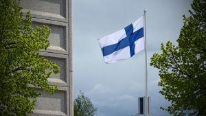 Suomen lippu tangossa.