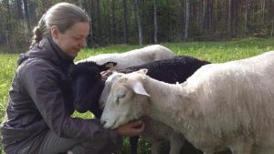 Kristiina Nyholm lampaidensa kanssa.