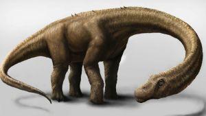 Carnegien luonnonhistoriallisen museon julkaisema havainnekuva Dreadnoughtus-dinosauruksesta.