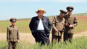 Rodong Sinmun -sanomalehden julkaisemassa päiväämättömässä kuvassa Pohjois-Korean johtaja Kim Jong-un vierailulla siementen tutkimuskeskuksessa Pohjois-Koreassa.