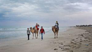 Turisteja kameliajelulla hiekkarannalla.
