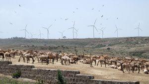 Tuulivoimapuisto Etiopiassa Adamassa 16. kesäkuuta 2015.