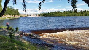 Kauneusaltaassa on Ouluss riittänyt vettä Merikosken voimaloiden ohijuoksutusten aikana 1.7.2015.