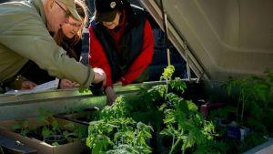 REKO-lähiruokaryhmän kautta kuluttajat ovat voineet ostaa suoraan tuottajilta muun muassa taimia, yrttejä, kananmunia, lihaa, kalaa ja viljatuotteita.