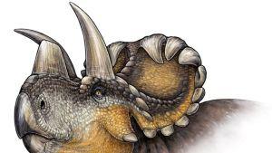 Piirroskuvassa Wendiceratops pinhornensisin pää