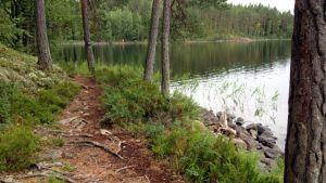 Polku Tervajärven rannalla Repovedellä.