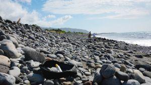 Rengas ja muovipullo ajautuneena rannalle Réunionin pohjoisrannikolla.