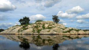 Saari, josta kuolleet lokit löytyivät.