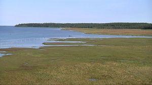 Kuvassa rantaviivaa: vesijättömaata ja merta, taustalla metsää.