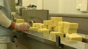 Kuusamon juuston tehtaan linjasto