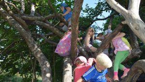 Alvettulan metsäeskarit kiipeilevät