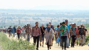 Syyrialaisia pakolaisia Serbian puolella lähellä Miratovacin kylää ja Makedoninan rajaa.