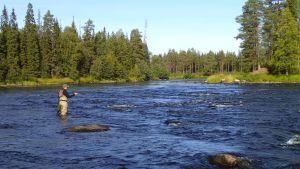 Perhokalastuksen SM-kisat järjestettiin edellisen kerran Iijoella vuonna 2013.