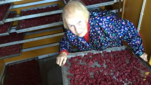 Marjayrittäjä Hilkka Ahonen kuivattaa myös karpaloita kotitilallaan Raahen Piehingin kylällä.